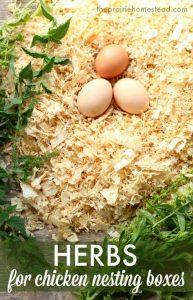 0001 Nesting Box Herb Spearmint