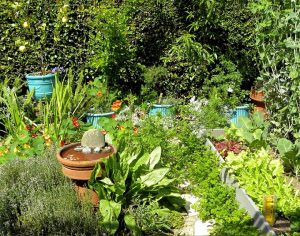 Nesting Box Herb Garden