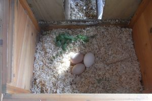 Nesting Box Herb- Basil -all types