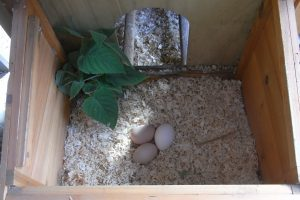 Nesting Box Herb, Sage culinary types