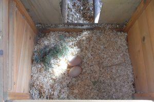 Nesting Box herb -Lavender