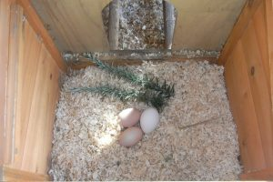 Nesting Box Herb - Rosemary