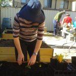 Vegie seedlings - Penny