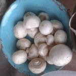 2 Cap or Field Mushrooms Harvested Jun 11 2017