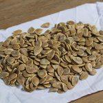Addy's Jarrah Pumpkin seed, a great result from 1 pumpkin