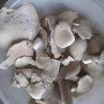 3 Oyster Mushrooms Day 4 pm Harvested Jun 11 2017