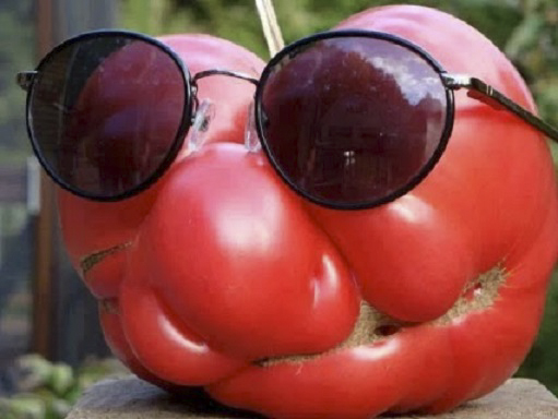 tomato with sunnies