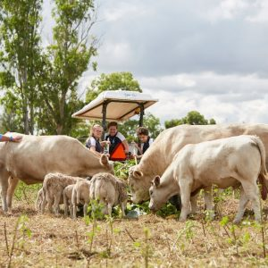 on the farm at Chifley College