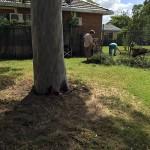 More pruning