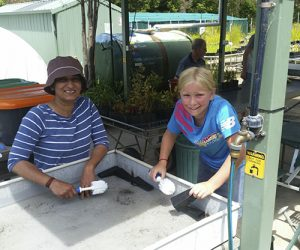 Washing and disinfecting pots for new seedlings