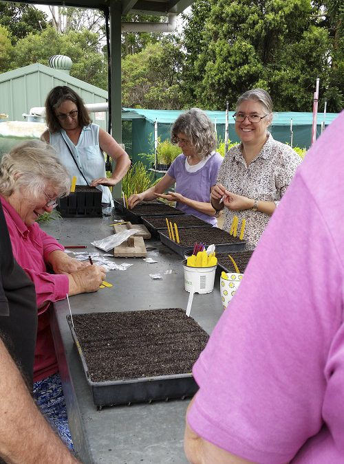 Planting seeds for April meeting.bush tucker Murnong Yam included