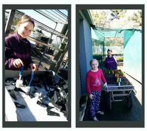 Zoe and Hayley, part of our seedsaver Kids Medical team, put strict plant hygiene measures into action, washing the pots and putting all the seedlings back in the greenhouse.
