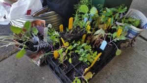 Plants for Oaklands School