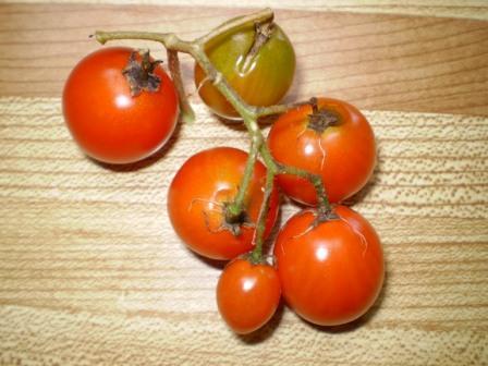 cherry tomato cluster