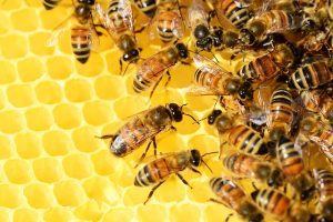 Starting your own Bee Hive